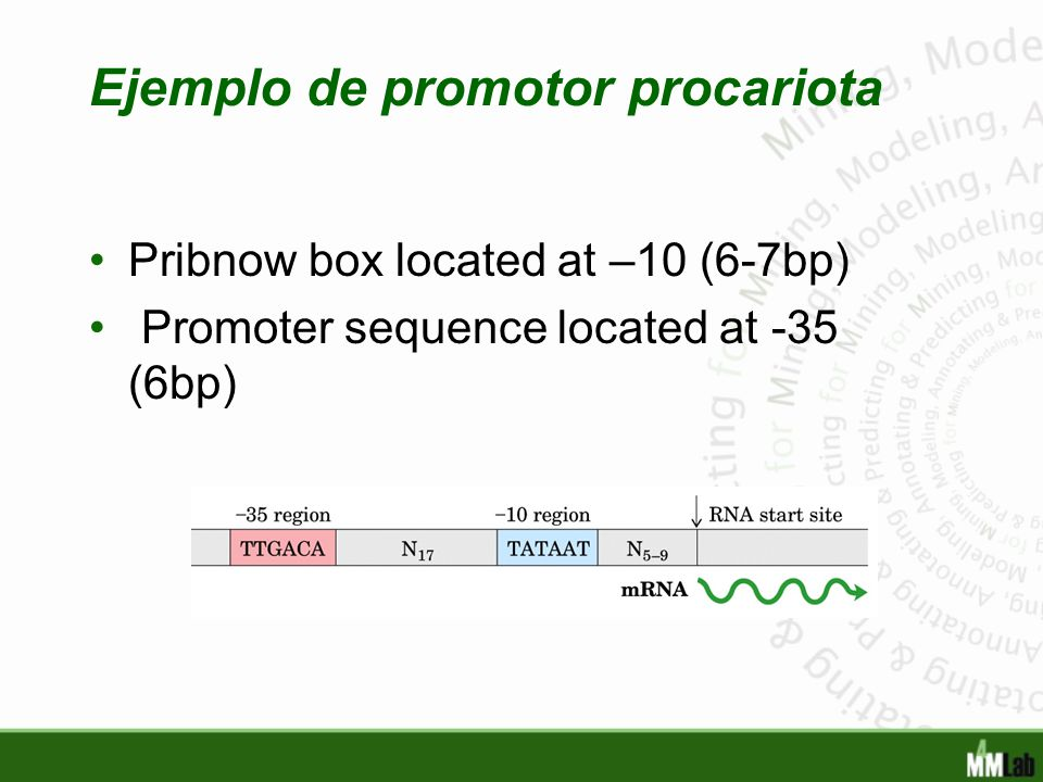 Ejemplo de promotor procariota