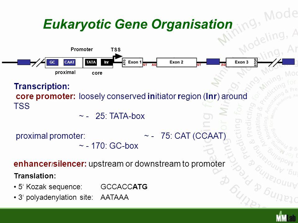 Eukaryotic Gene Organisation