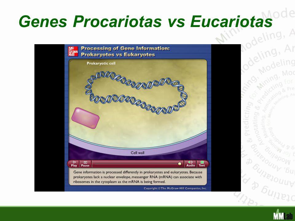 Genes Procariotas vs Eucariotas