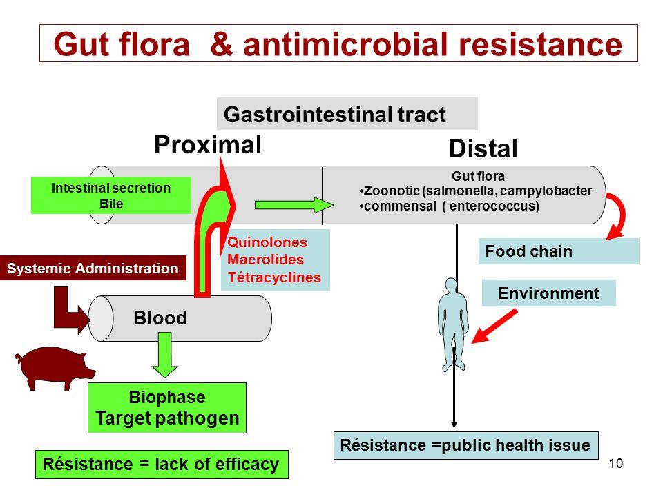 Gut flora & antimicrobial resistance