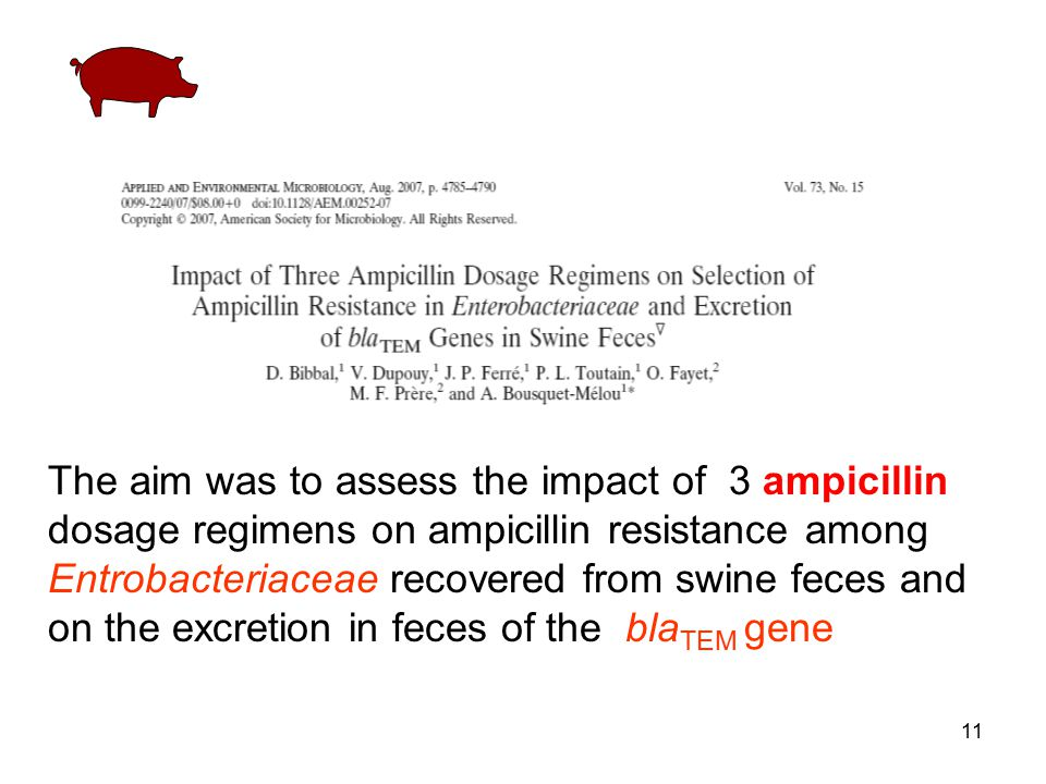The aim was to assess the impact of 3 ampicillin dosage regimens on ampicillin resistance among Entrobacteriaceae recovered from swine feces and on the excretion in feces of the blaTEM gene