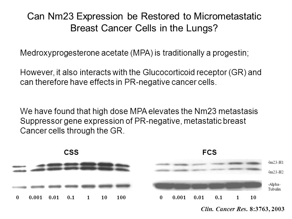 Can Nm23 Expression be Restored to Micrometastatic