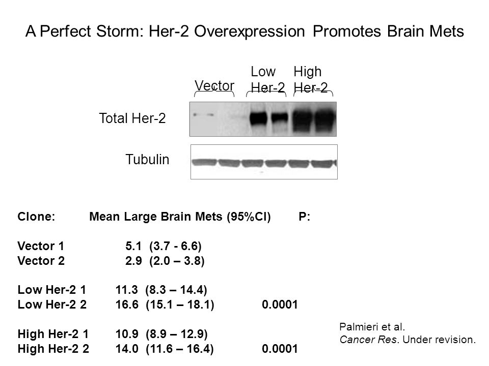 A Perfect Storm: Her-2 Overexpression Promotes Brain Mets