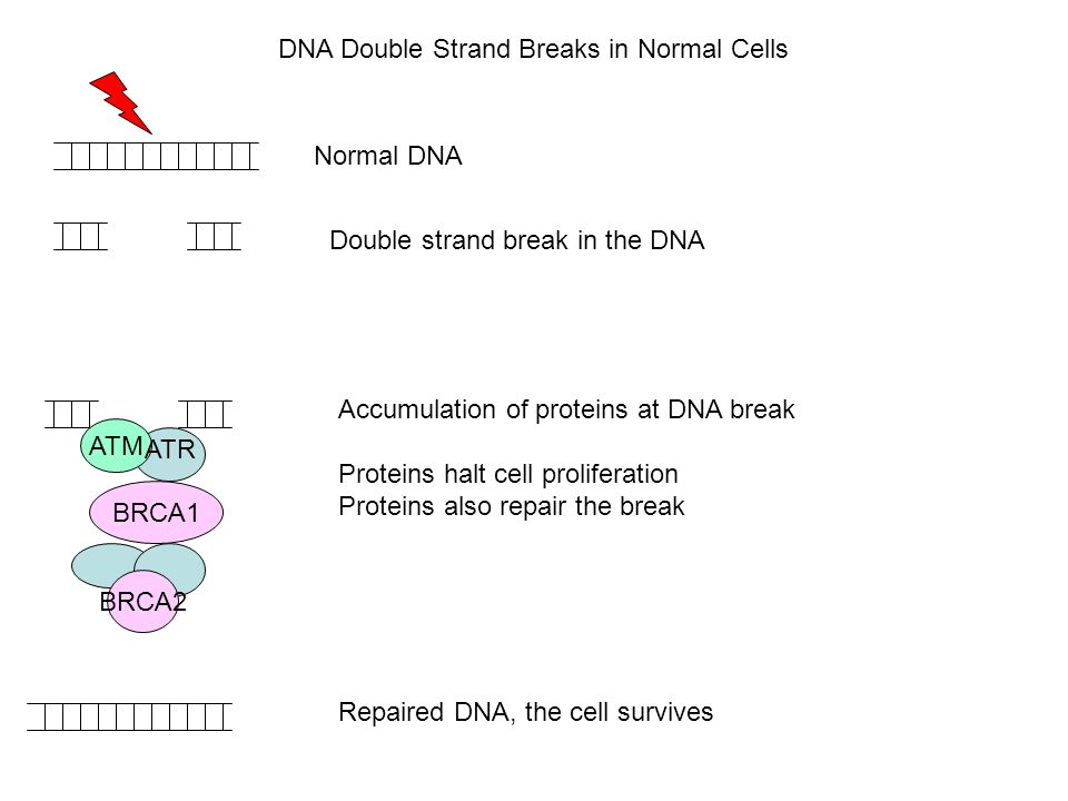DNA Double Strand Breaks in Normal Cells