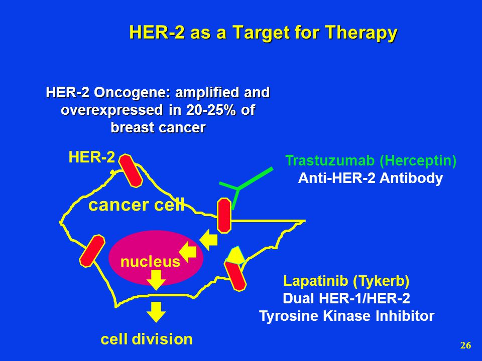 HER-2 as a Target for Therapy