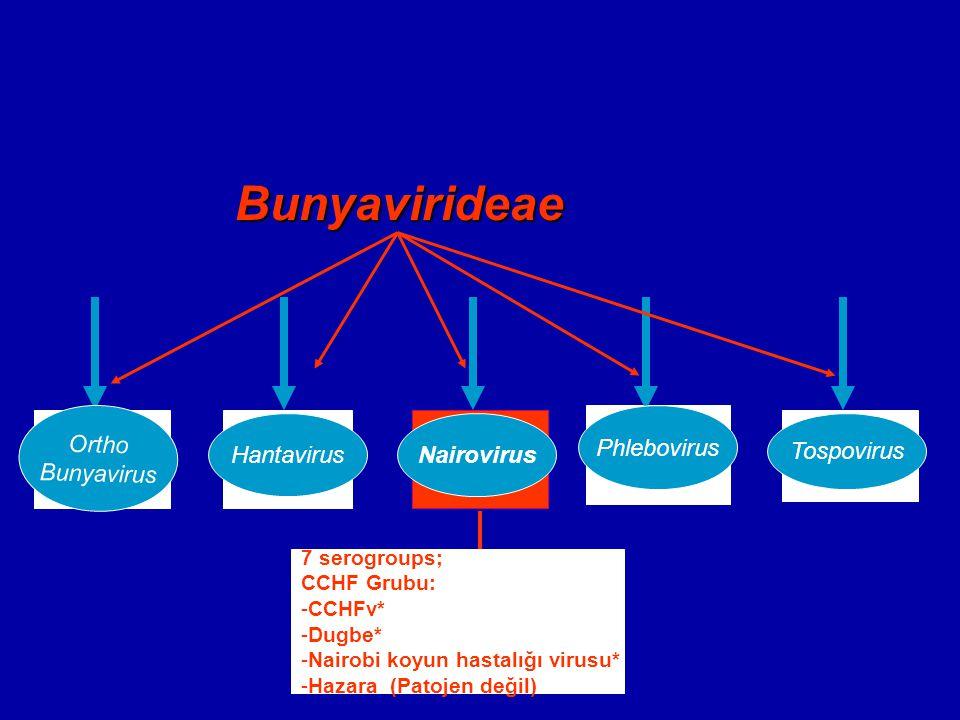 Bunyavirideae Nairovirus Ortho Bunyavirus Bunyavirus Hantavirus