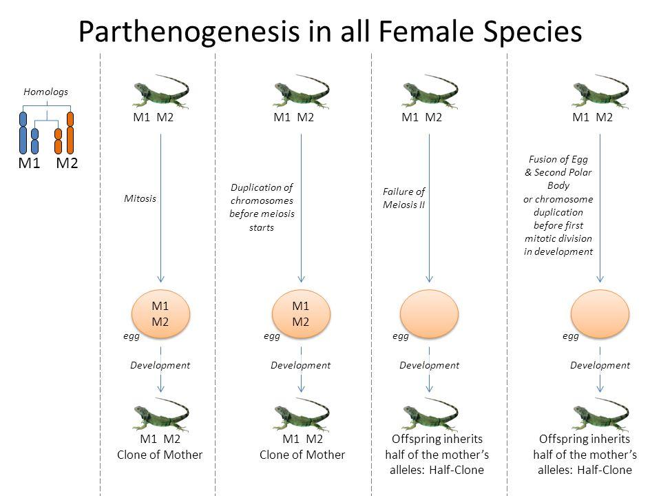 Parthenogenesis in all Female Species