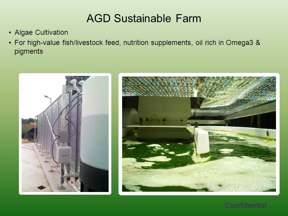 AGD Sustainable Farm Algae Cultivation