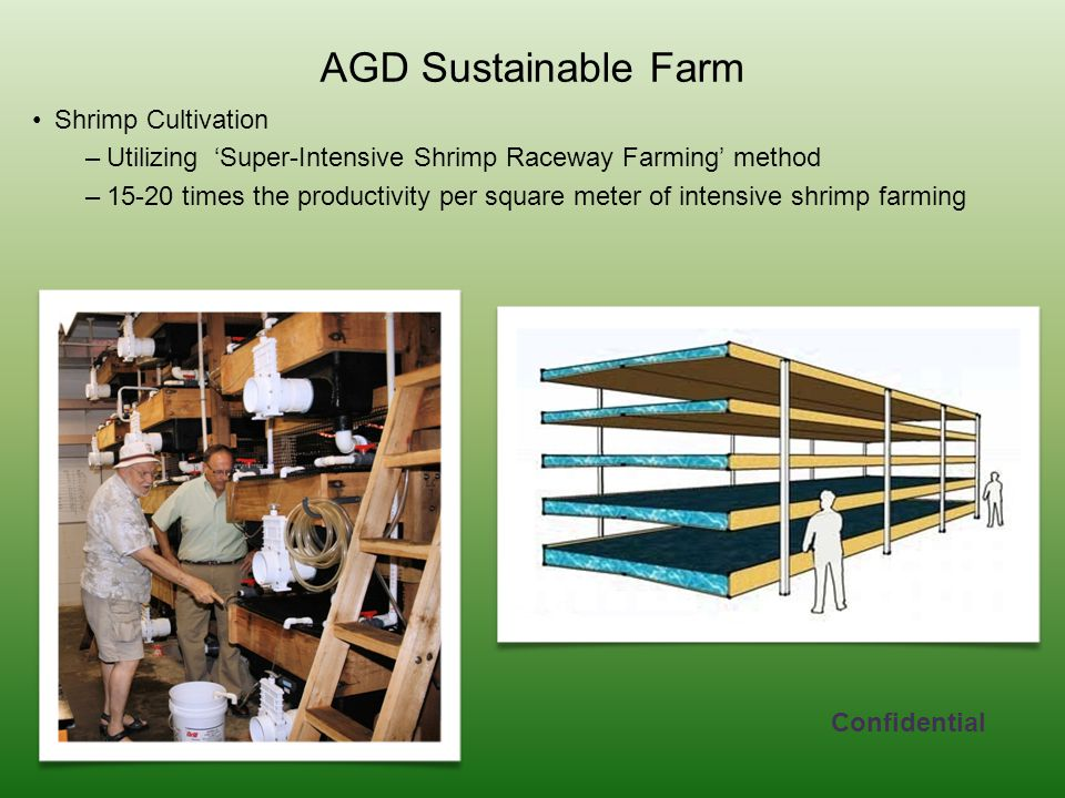 AGD Sustainable Farm Shrimp Cultivation