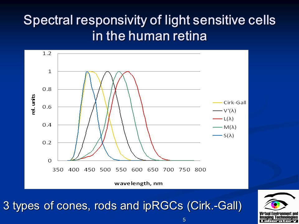 Spectral responsivity of light sensitive cells in the human retina