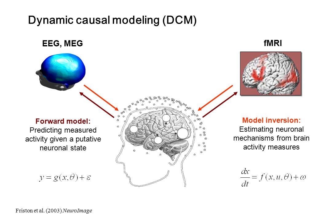 Dynamic causal modeling (DCM)