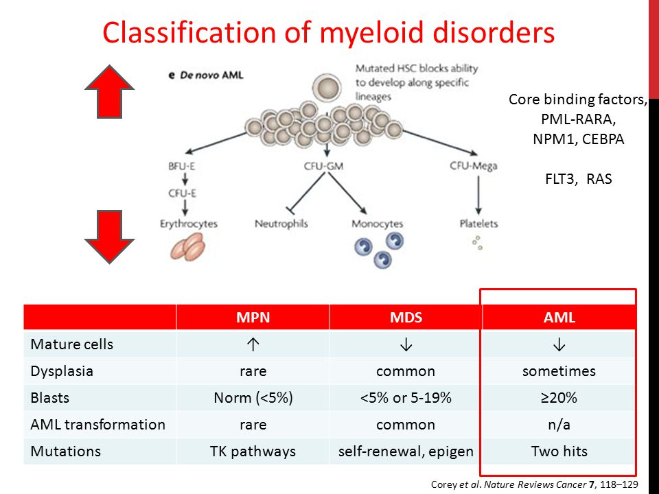 Classification of myeloid disorders