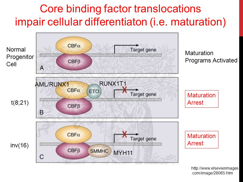 Core binding factor translocations