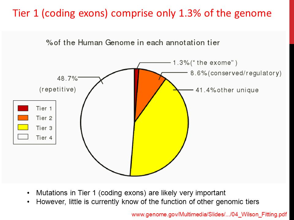 Tier 1 (coding exons) comprise only 1.3% of the genome