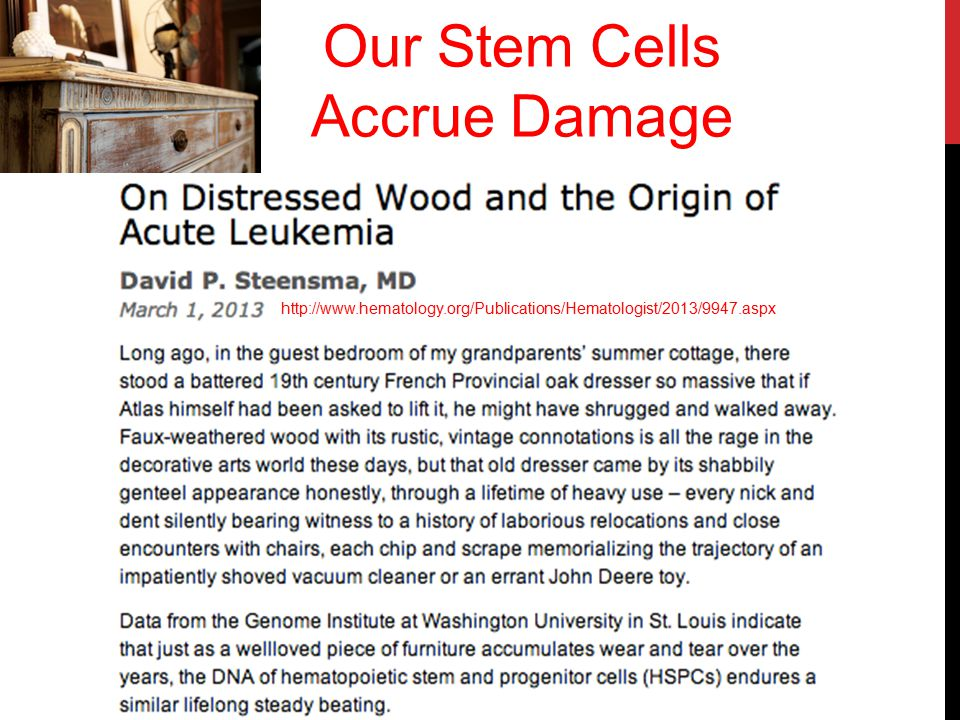 Our Stem Cells Accrue Damage