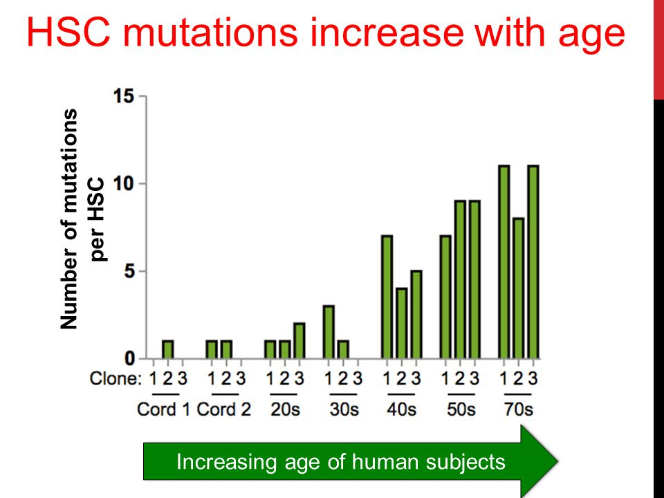 HSC mutations increase with age