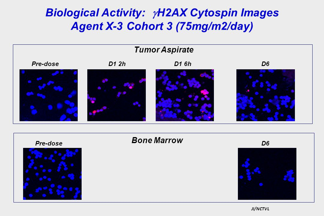 Biological Activity: H2AX Cytospin Images