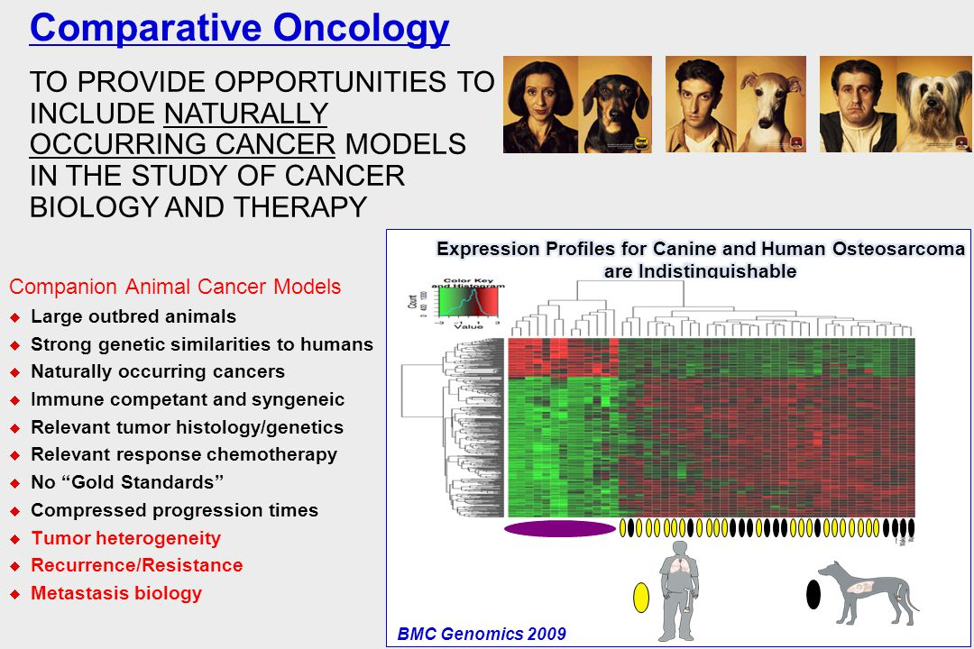 Comparative Oncology TO PROVIDE OPPORTUNITIES TO INCLUDE NATURALLY OCCURRING CANCER MODELS IN THE STUDY OF CANCER BIOLOGY AND THERAPY.