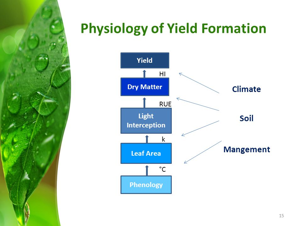 Physiology of Yield Formation
