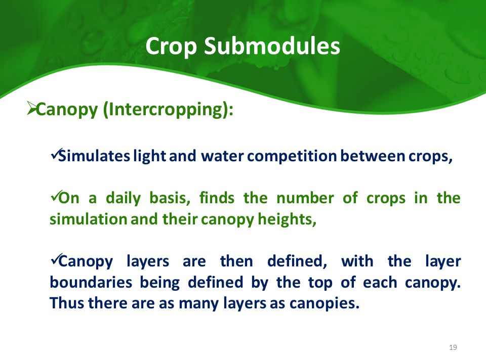 Crop Submodules Canopy (Intercropping):