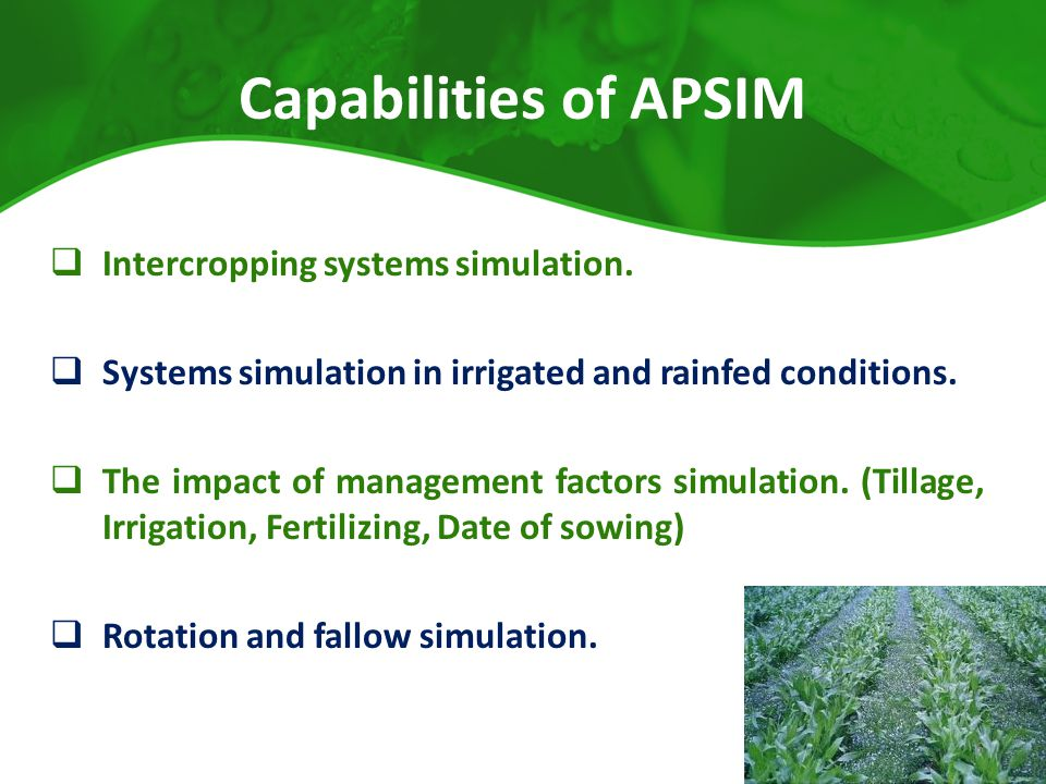 Capabilities of APSIM Intercropping systems simulation.
