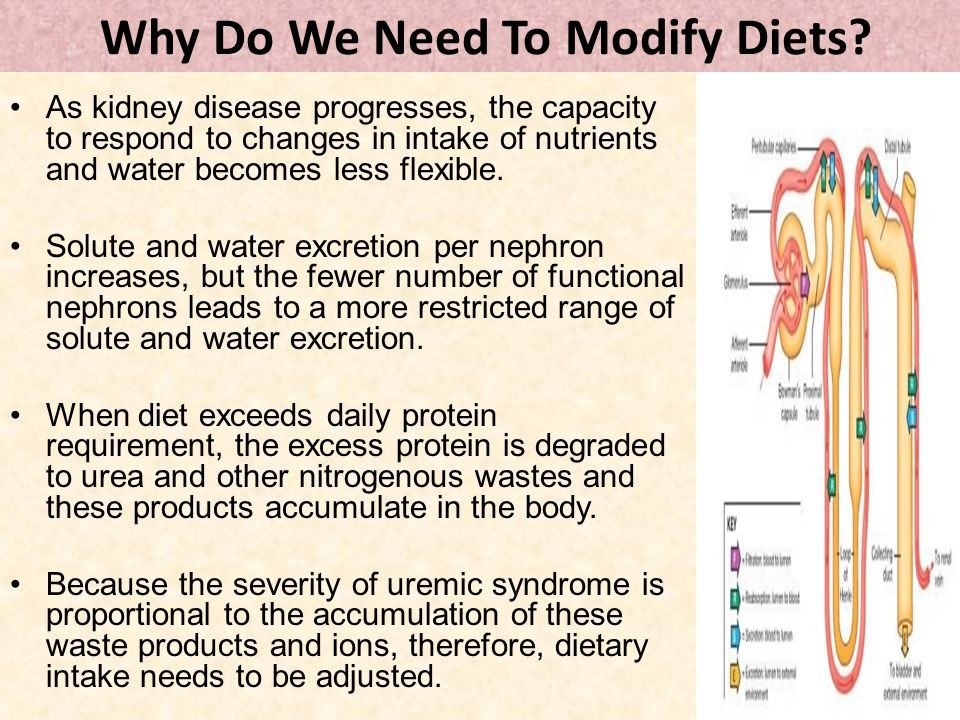 Why Do We Need To Modify Diets