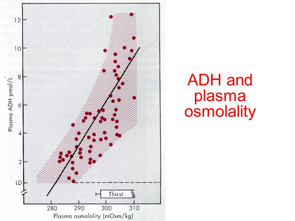 ADH and plasma osmolality