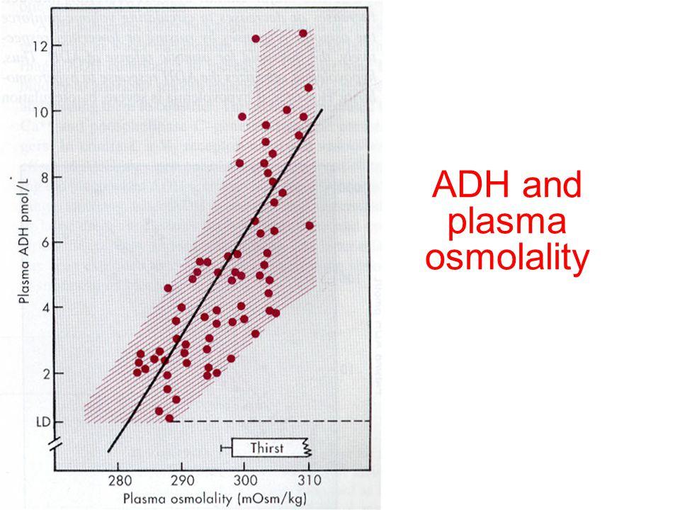 ADH and plasma osmolality