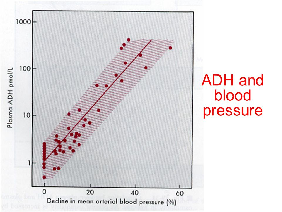 ADH and blood pressure