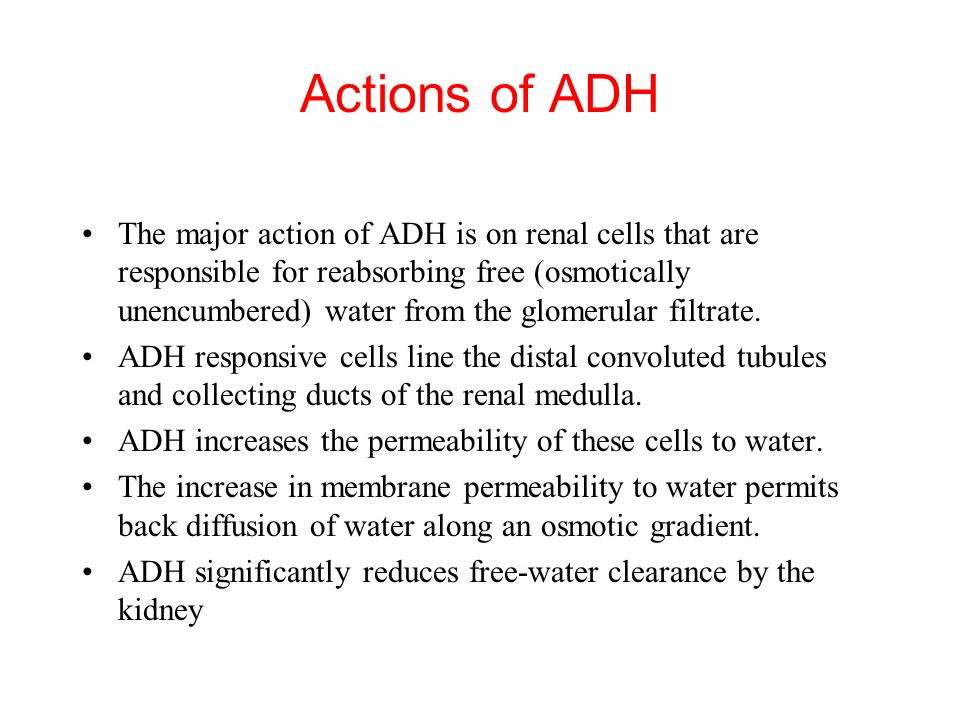 Actions of ADH