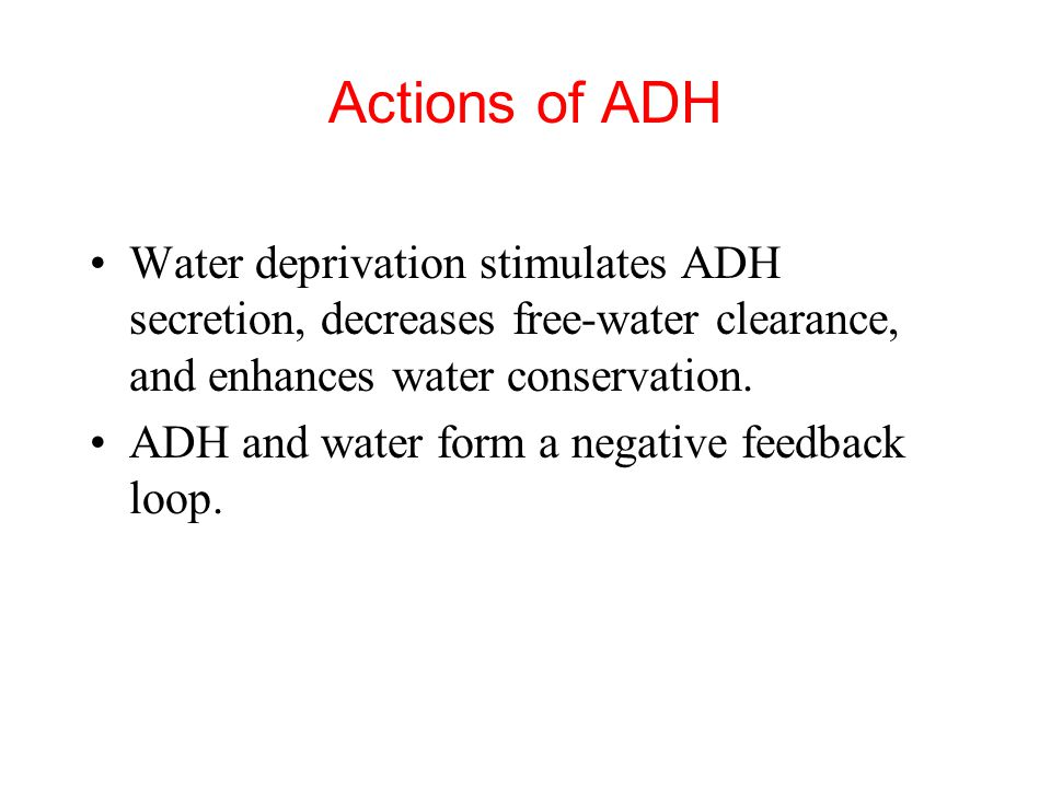 Actions of ADH Water deprivation stimulates ADH secretion, decreases free-water clearance, and enhances water conservation.
