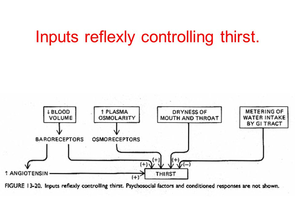 Inputs reflexly controlling thirst.