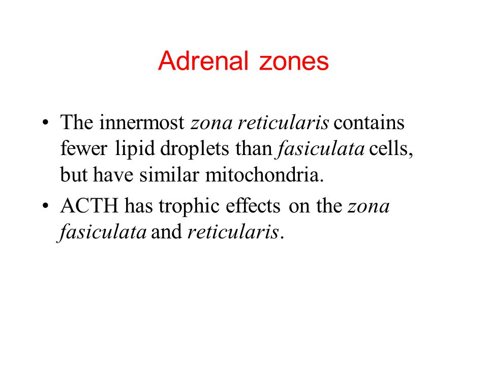Adrenal zones The innermost zona reticularis contains fewer lipid droplets than fasiculata cells, but have similar mitochondria.