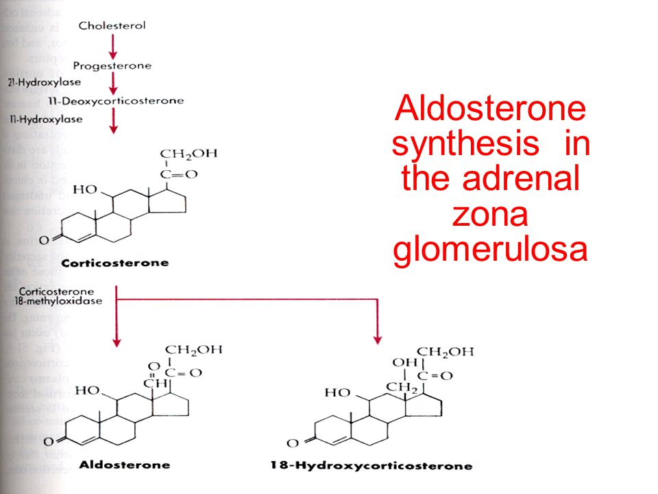 Aldosterone synthesis in the adrenal zona glomerulosa