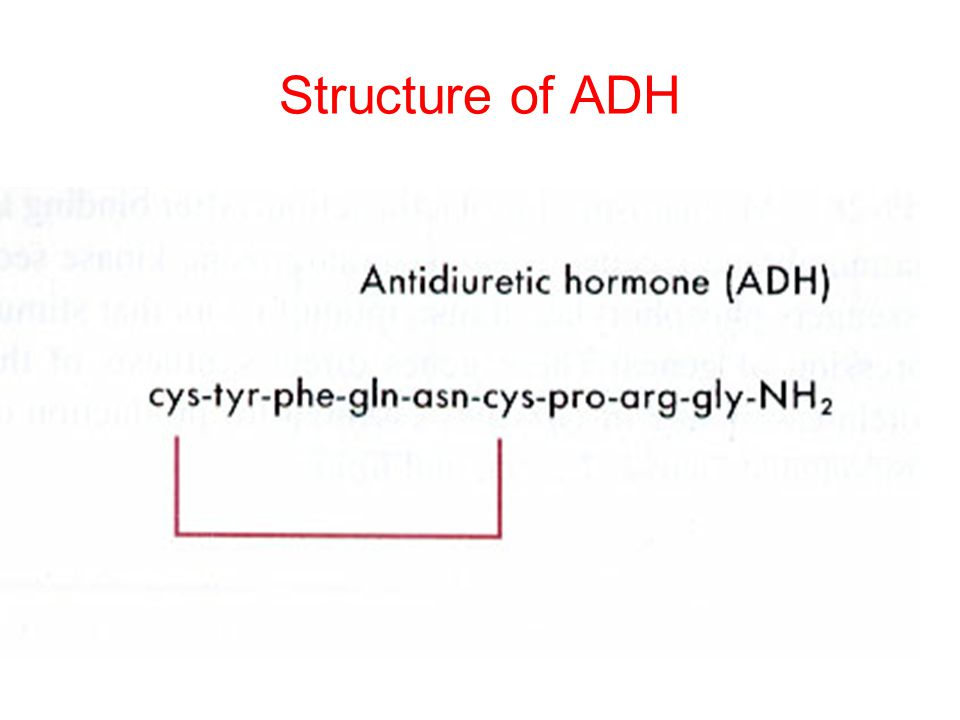 Structure of ADH