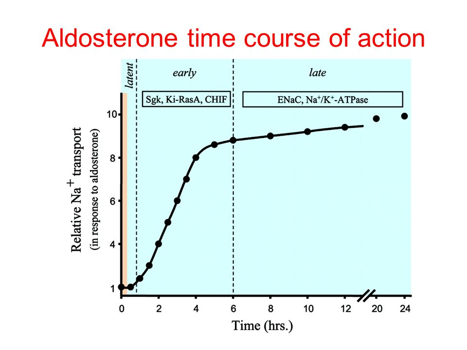 Aldosterone time course of action