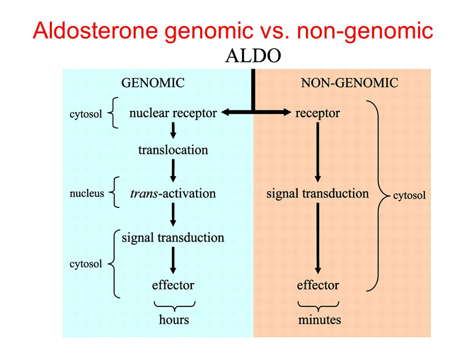 Aldosterone genomic vs. non-genomic