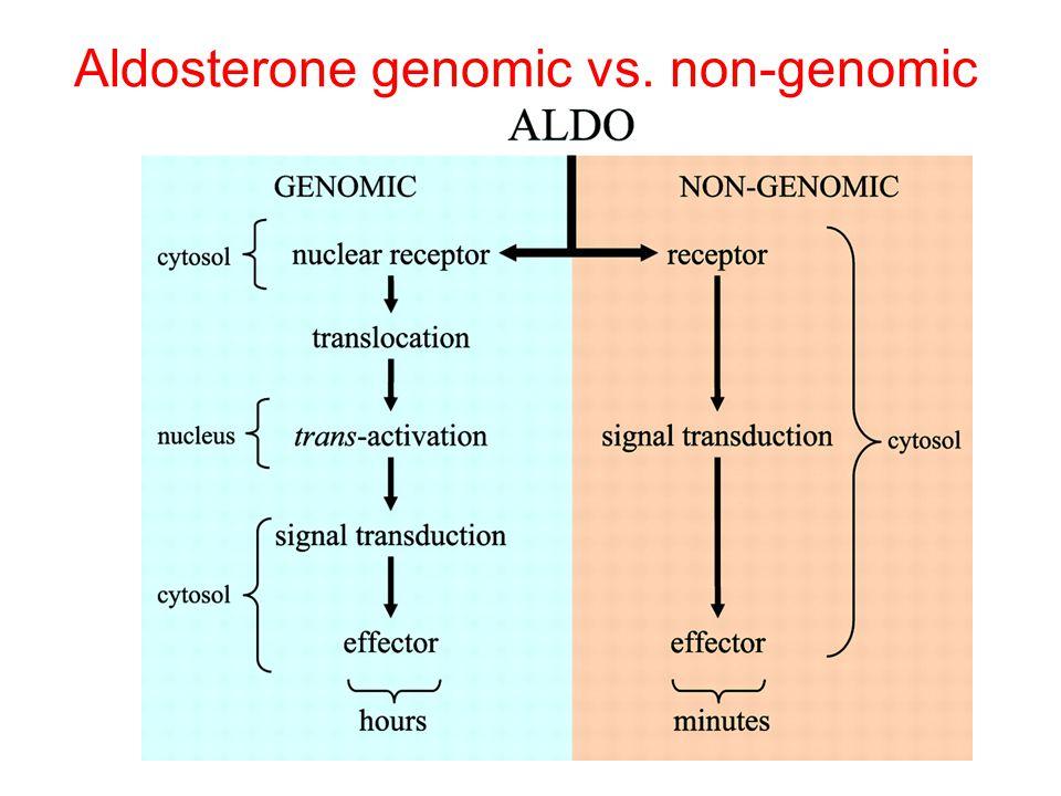 Aldosterone genomic vs. non-genomic