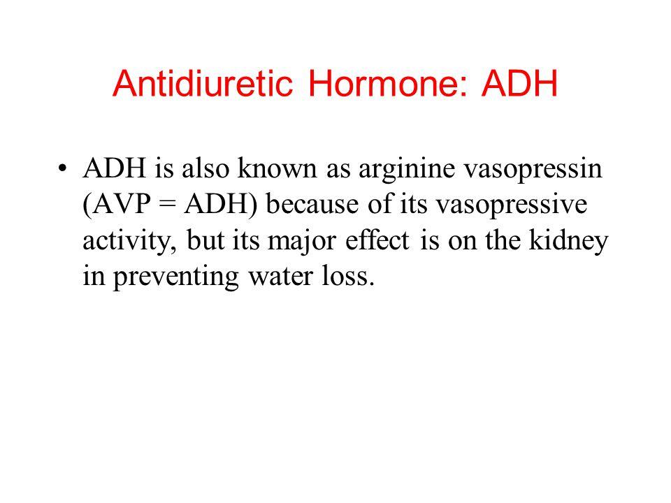 Antidiuretic Hormone: ADH