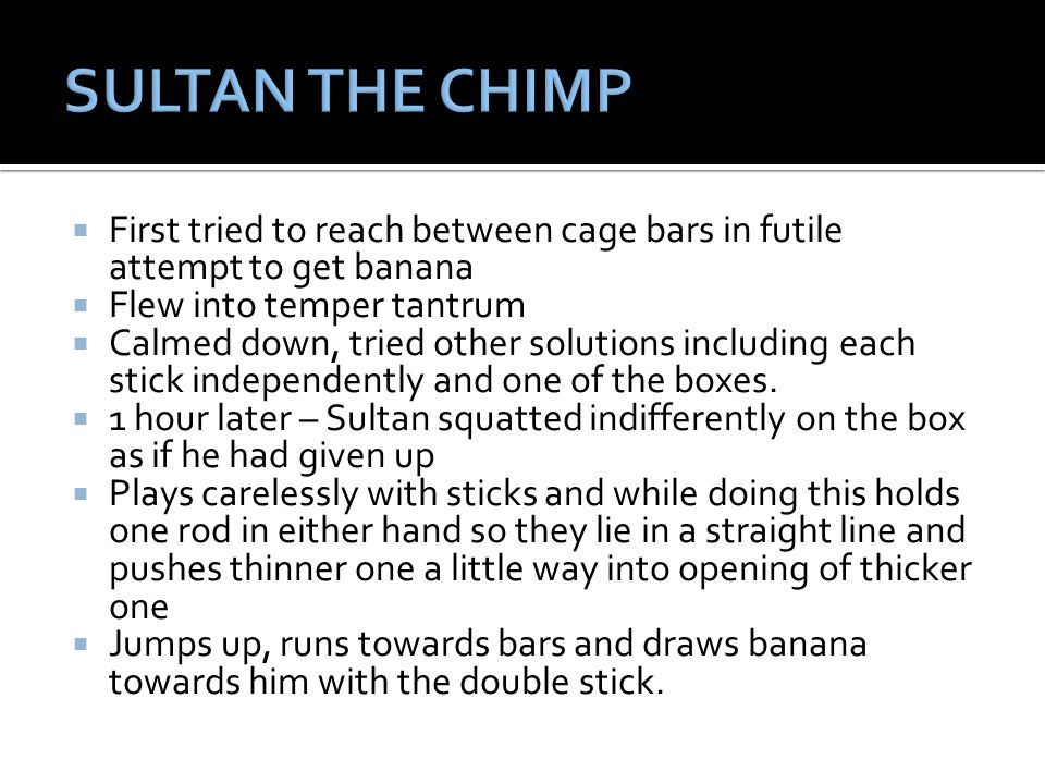 SULTAN THE CHIMP First tried to reach between cage bars in futile attempt to get banana. Flew into temper tantrum.