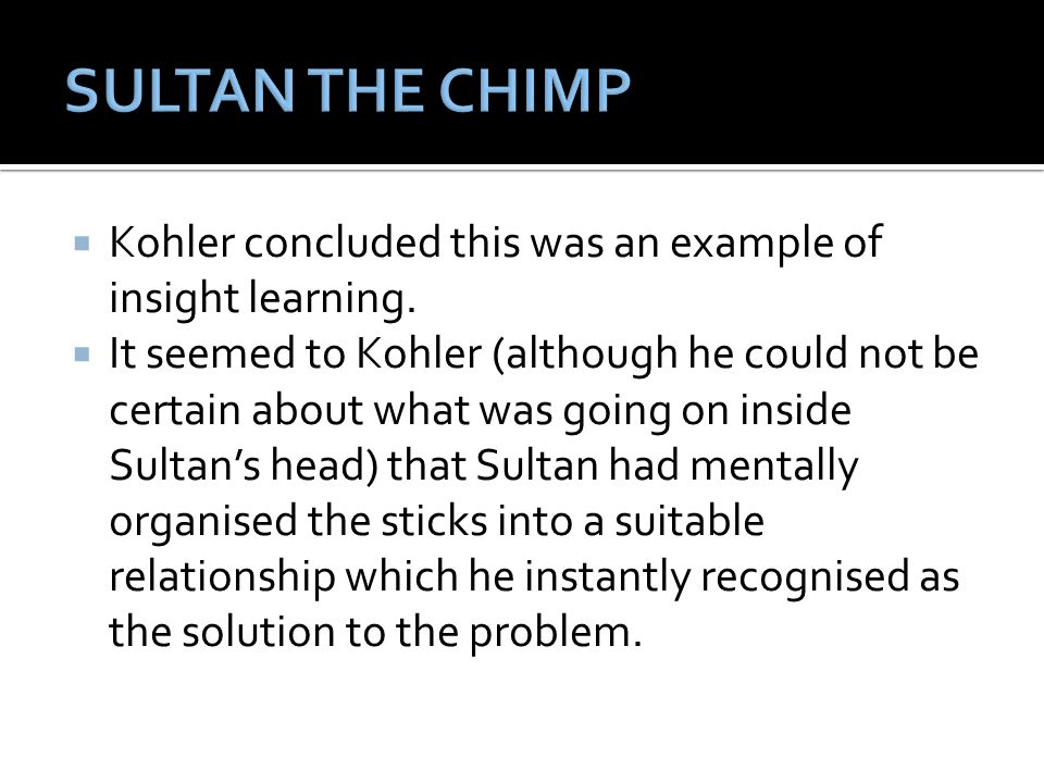 SULTAN THE CHIMP Kohler concluded this was an example of insight learning.
