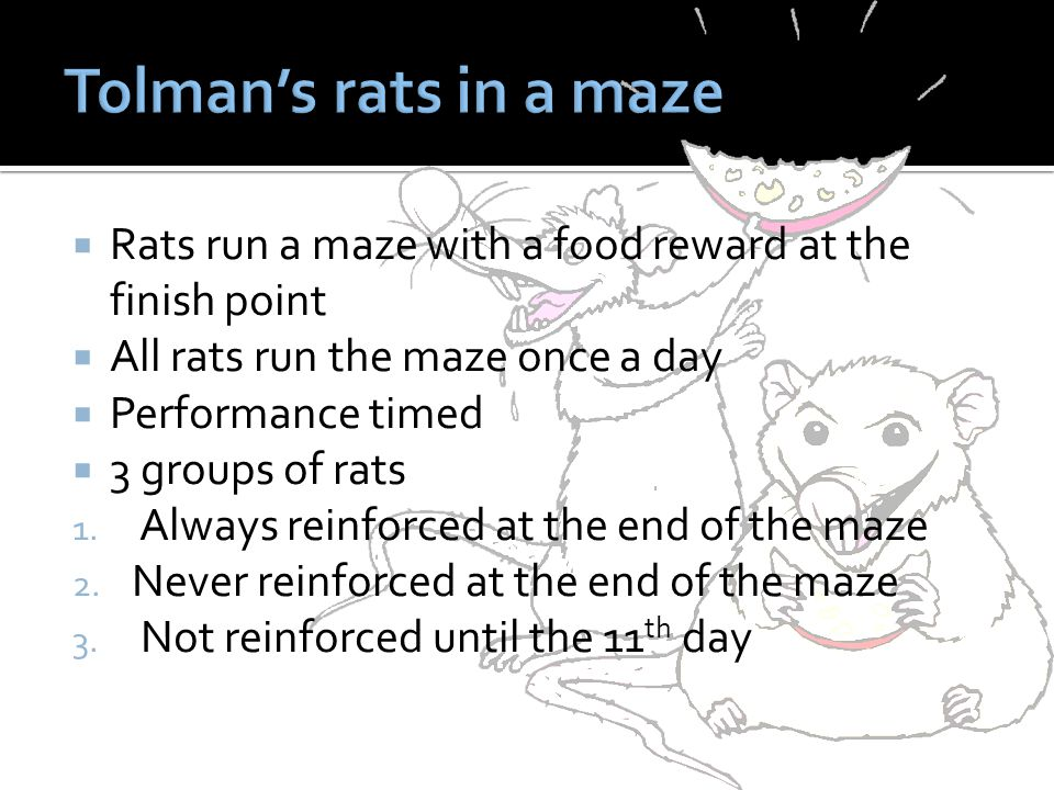 Tolman's rats in a maze Rats run a maze with a food reward at the finish point. All rats run the maze once a day.