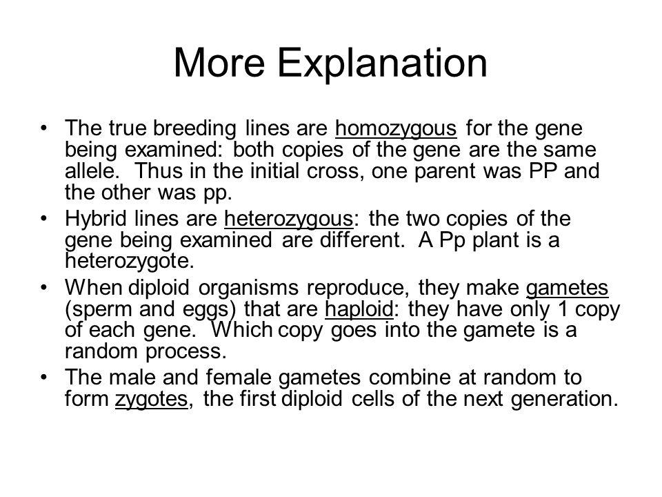 More Explanation