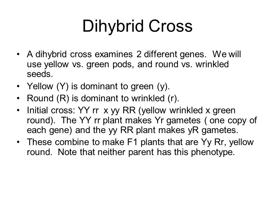Dihybrid Cross A dihybrid cross examines 2 different genes. We will use yellow vs. green pods, and round vs. wrinkled seeds.