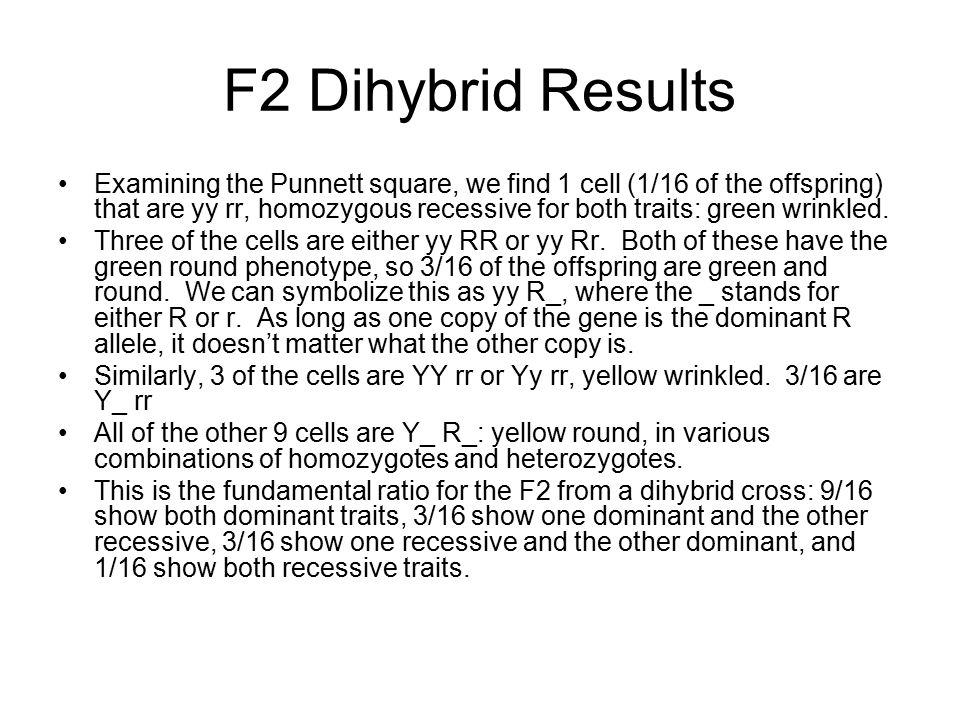 F2 Dihybrid Results