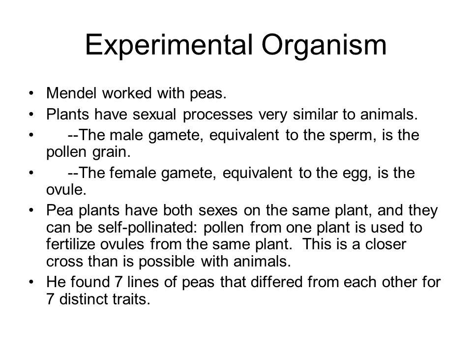 Experimental Organism