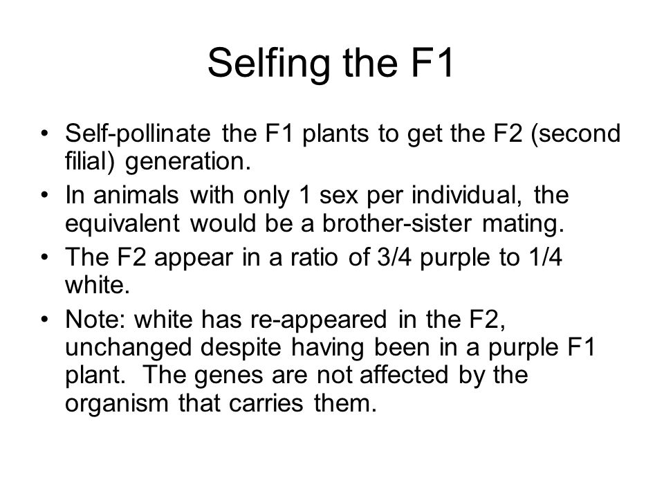 Selfing the F1 Self-pollinate the F1 plants to get the F2 (second filial) generation.