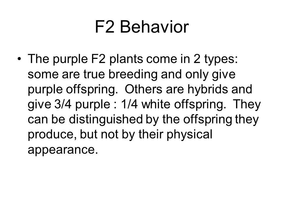 F2 Behavior
