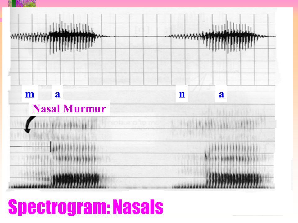 m a n a Nasal Murmur Spectrogram: Nasals