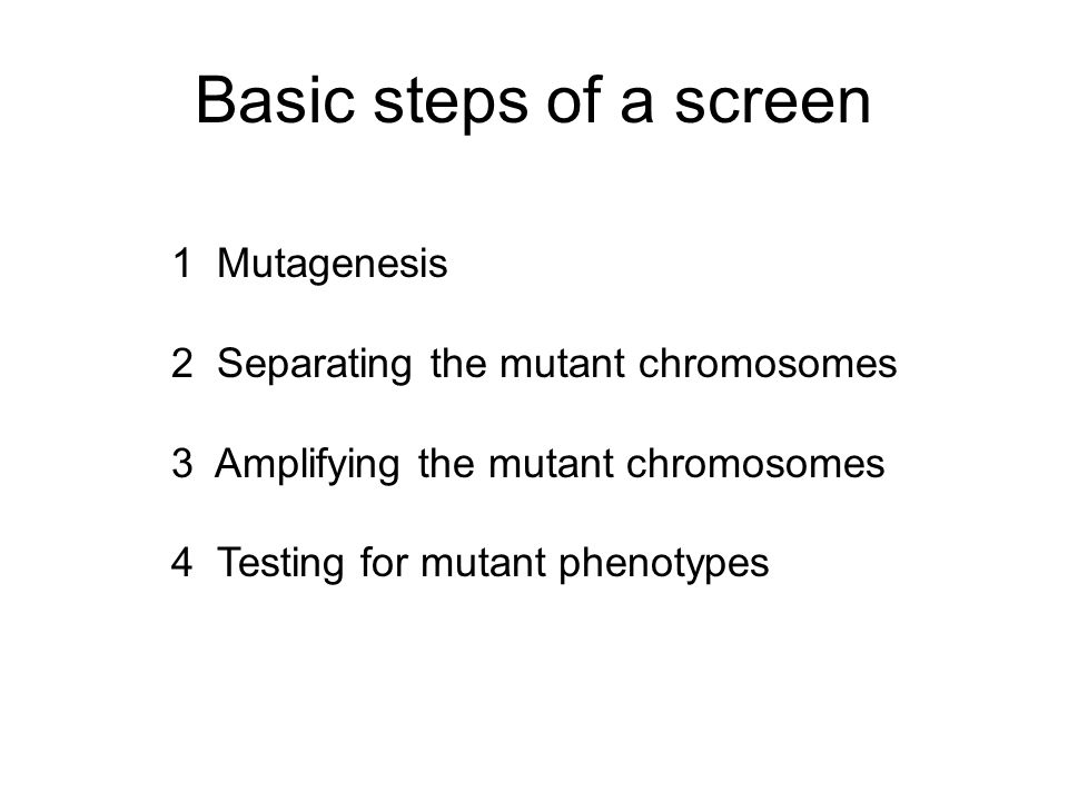 Basic steps of a screen 1 Mutagenesis